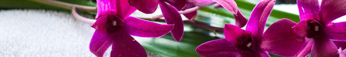 Thin-purple-flowers—divider size -1200×198