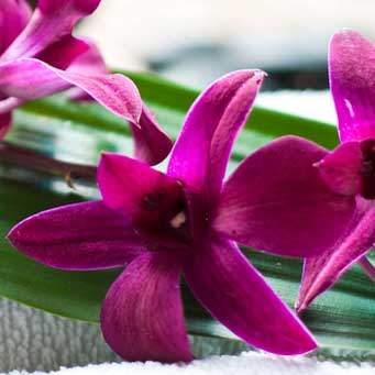 supplements-flower